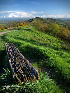 Bench on the Hills