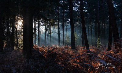 New Forest, Hampshire