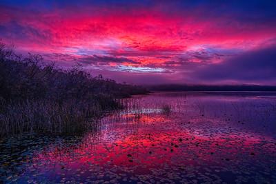 Sunrise at Marymoor
