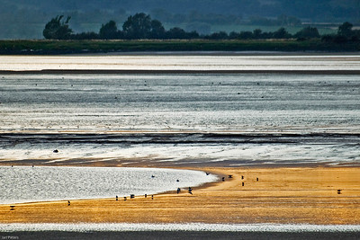 The Terning Tide