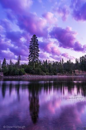 Towering Sunset Tree