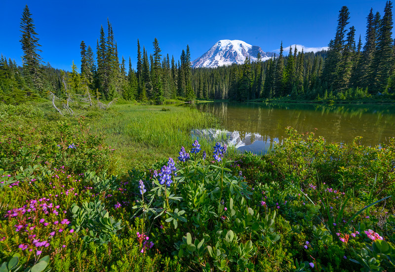 Summer wildflowers at Reflection Lake on Stevens Canyon Road , Mt. Rainier National Park, Washington State