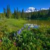 Summer wildflowers at Reflection Lake on Stevens Canyon Road , Mt. Rainier National Park, Washington State