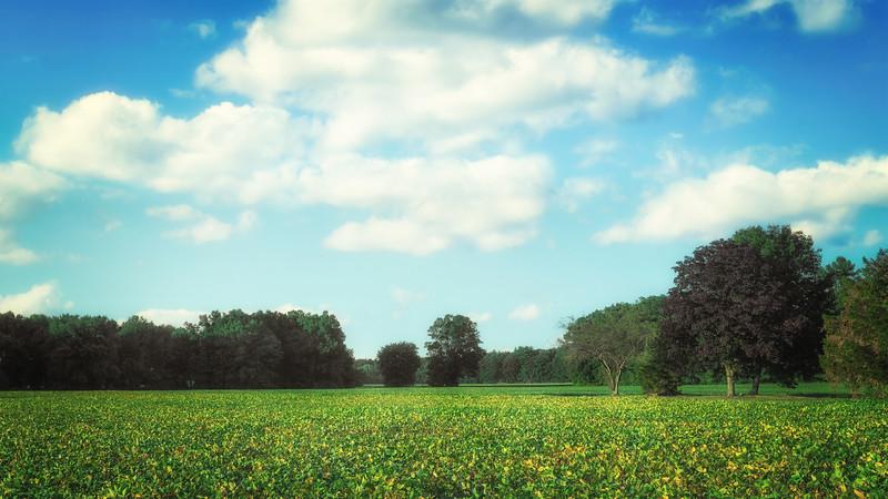 Field in Cromwell, CT.