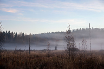Foggy Nuuksio. Espoo, Finland, 2015.