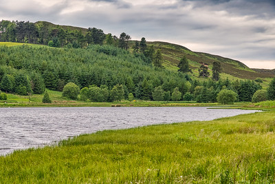 Piperdam Lake & Forrest Pines in Scotland