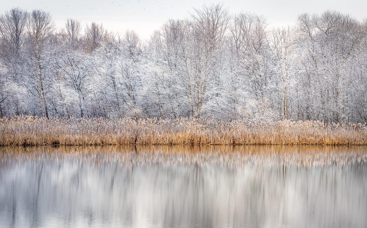 Silver Lake Reeds
