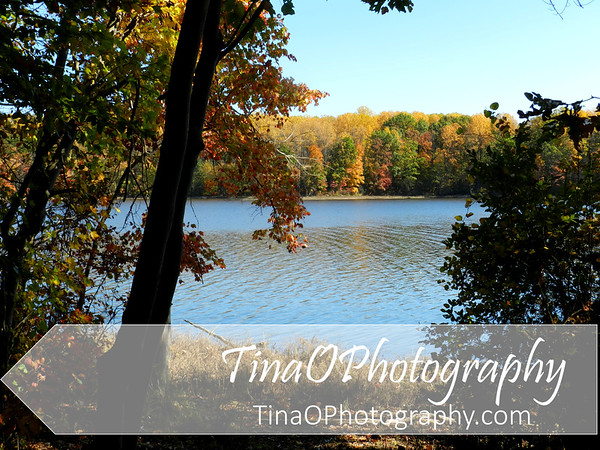 Burke Lake in the Fall 3