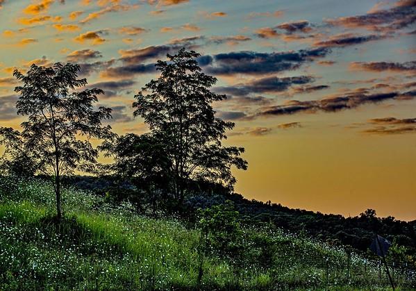 A grove landscape