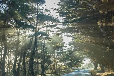 Coast Hwy sunbeams