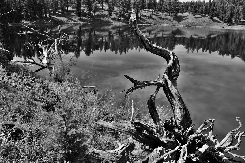 Trout Lake, Yellowstone National Park.  I was struck by the way the dead trees above the water matched the dead trees lying below the water.  Couldn't quite make the submerged trees pop the way I wanted them to.