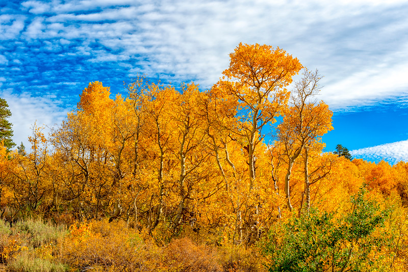Fall Colors - Sonora Pass-4