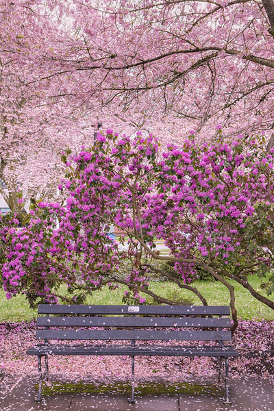 Have a seat in the cherry blossoms.