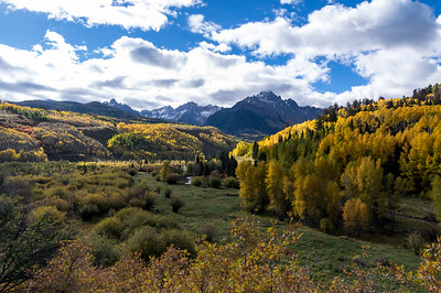 Aspens outside of Ridgway, Colorado