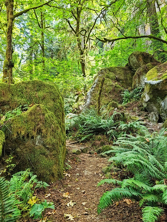 Twilight Forest 1