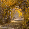 Aspen Tree Tunnell