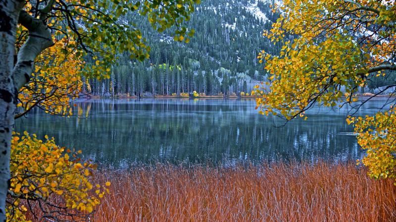 Gull Lake Weeds fall 2012