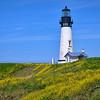 Yaquina Head Lighthouse with yellow wildflowers near Newport, Oregon
