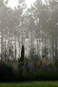 Foggy Morning Lake Woodruff Wildlife Refuge