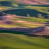 Rolling Fields, Palouse, WA