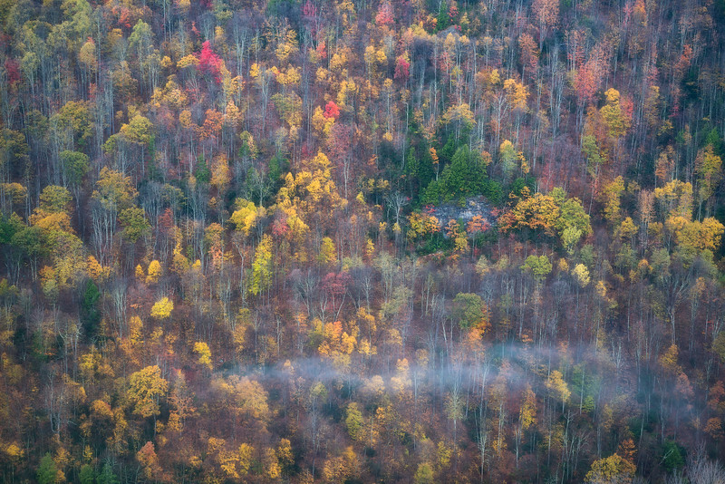Autumn's Greeting
