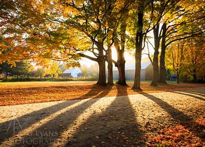 Fall Shadows