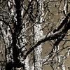 Tree Contrast