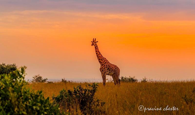 Beauty of Mara