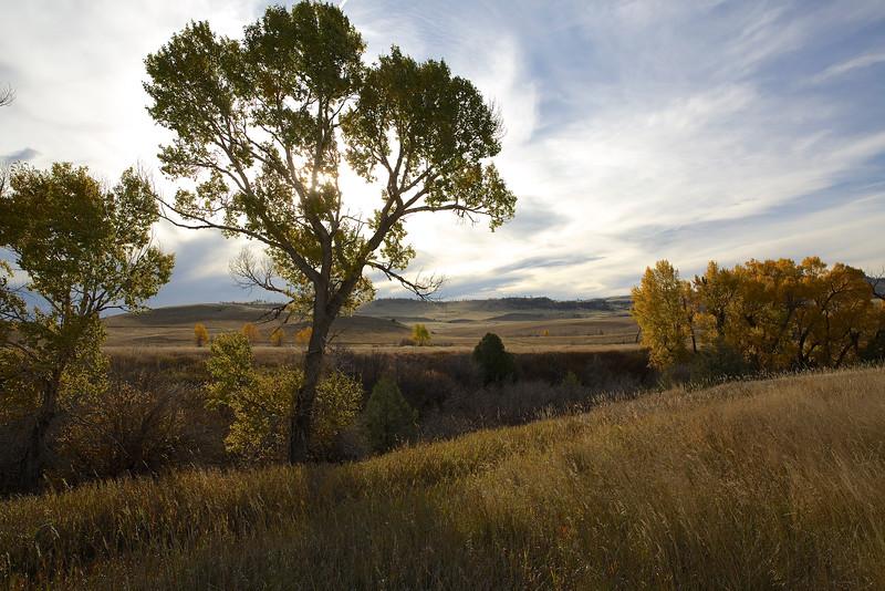 Painterly Trees #2. Near Livingston, Montana