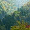 Japan Fall Forest