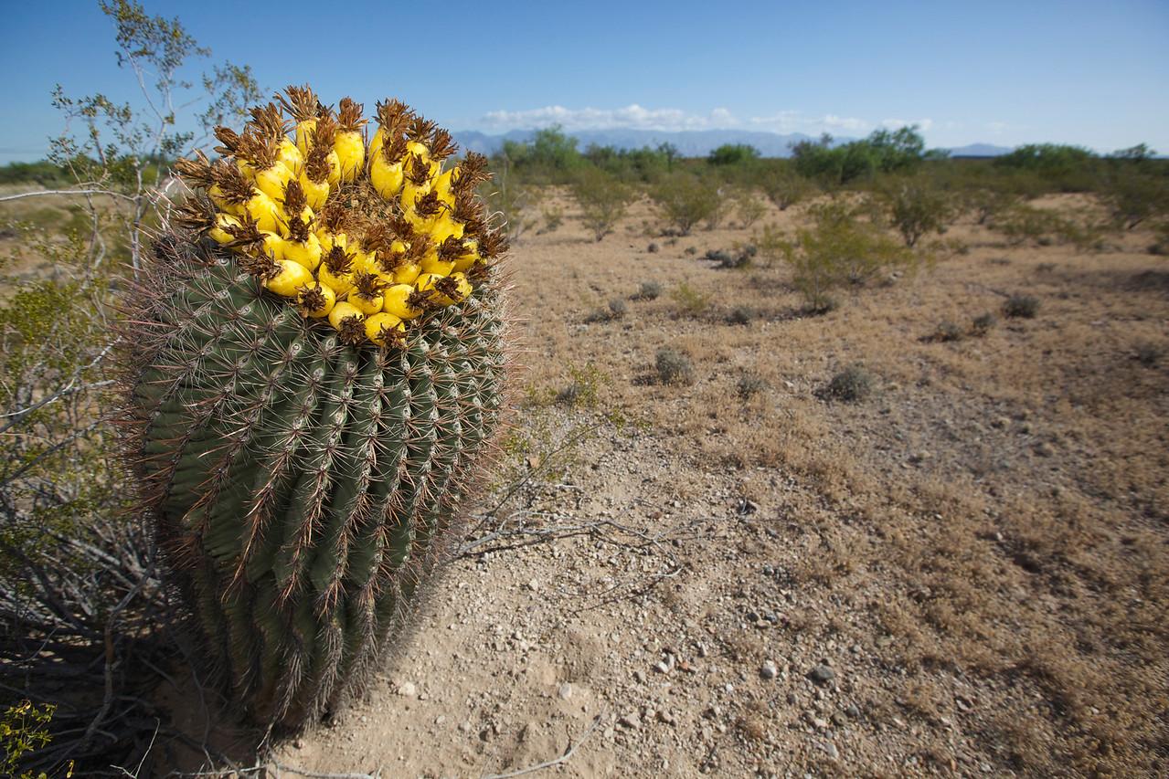 Cactus #1.  Sonoran Desert, Arizona