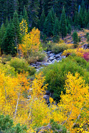 Deadman Creek Morning Fall Colors - Sonora Pass-11