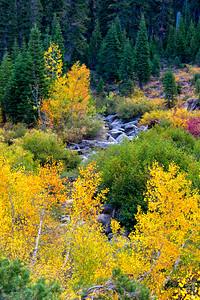 Deadman Creek Morning Fall Colors - Sonora Pass-11