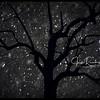 """Starry Snowy Night"""