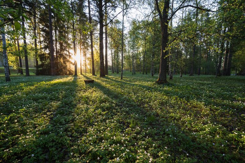 Piikahaka greenspace