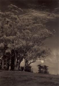 Sleepy Moon, Sea Ranch, California