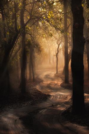 Misty Morning Trail - India