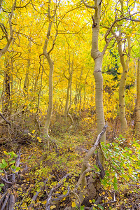 Deadman Creek Fall Colors - Sonora Pass-7