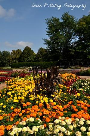 Marigold Flowerbed