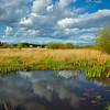 Tennant Lake Park, Ferndale
