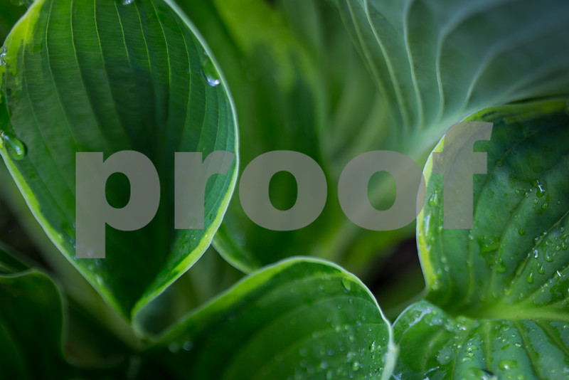 Day #113 - Variegated  Leaves