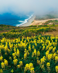 Glimpse of Summer- Pt.Reyes National Seashore, CA