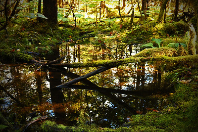 Wetland in the Tongass National Forest