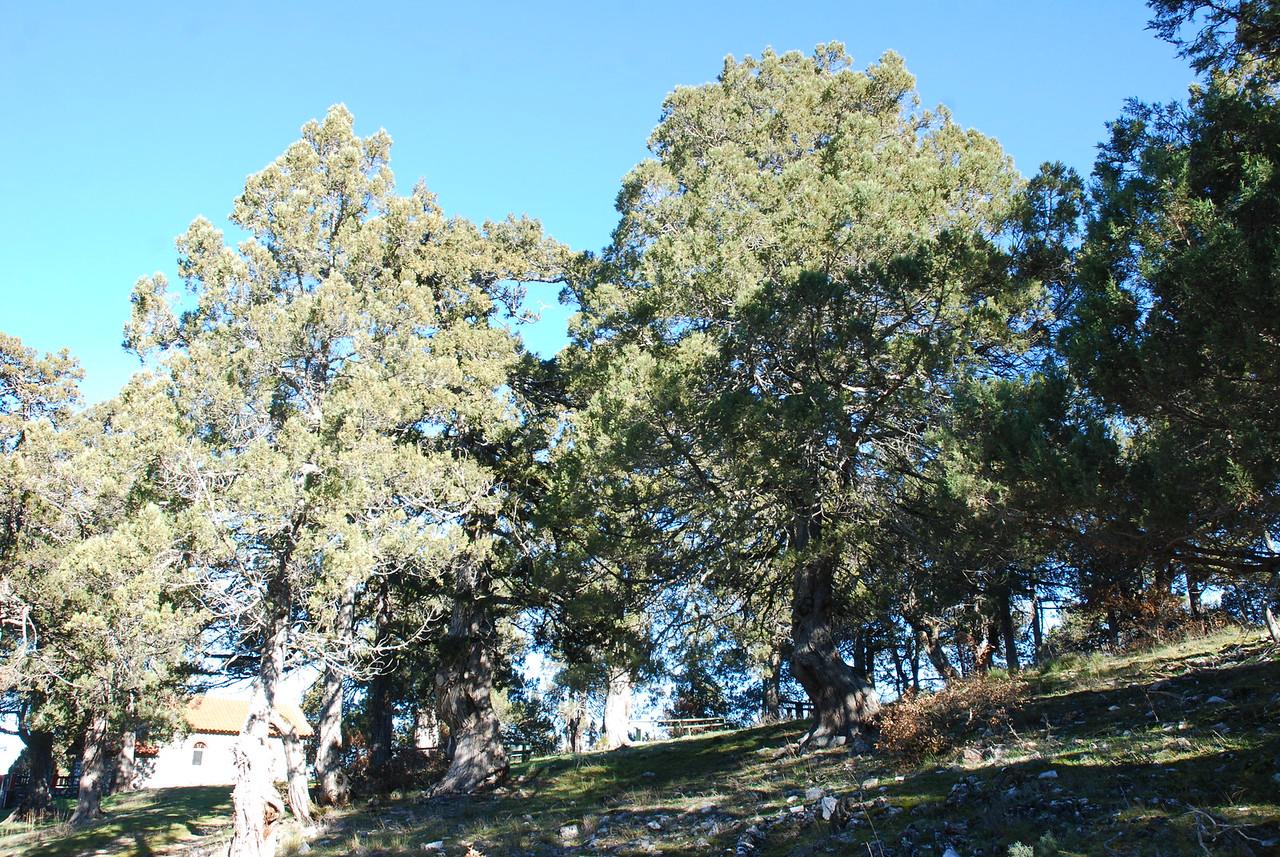 Juniperus Forest - St. George
