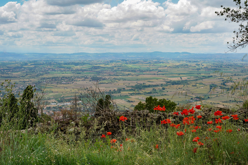 Poppies over Tuscany
