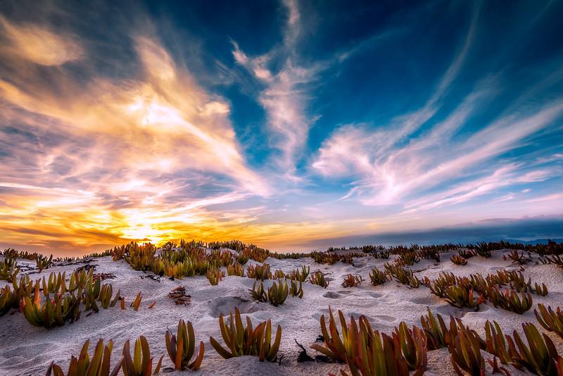 """Dunes"" @ Playa Del Rey (California)"