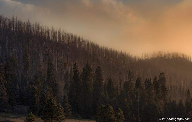 Smokey trees
