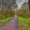 Long Twisty Muddy Path through Forrest