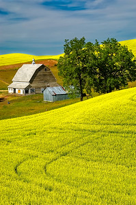 Barn in the Palouse, WA