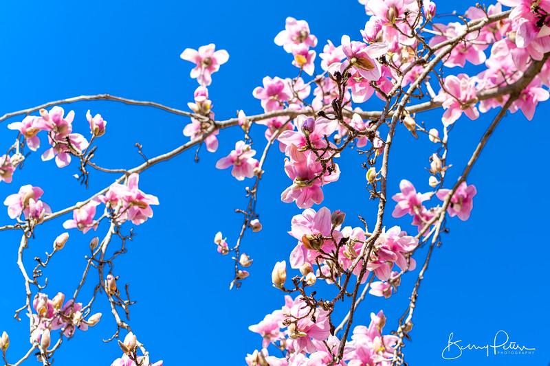Blooms of Spring